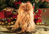 Vánoční reklamy 2017: Jaké si nenechat ujít?