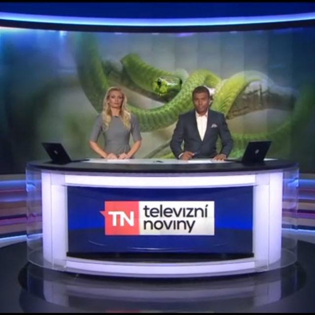 Zpravodajské relace nezklamaly, místo hada přinesly volby